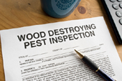 Termite Inspection